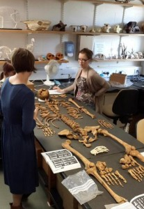 Working in the osteo lab with Great Chesterford skeletons