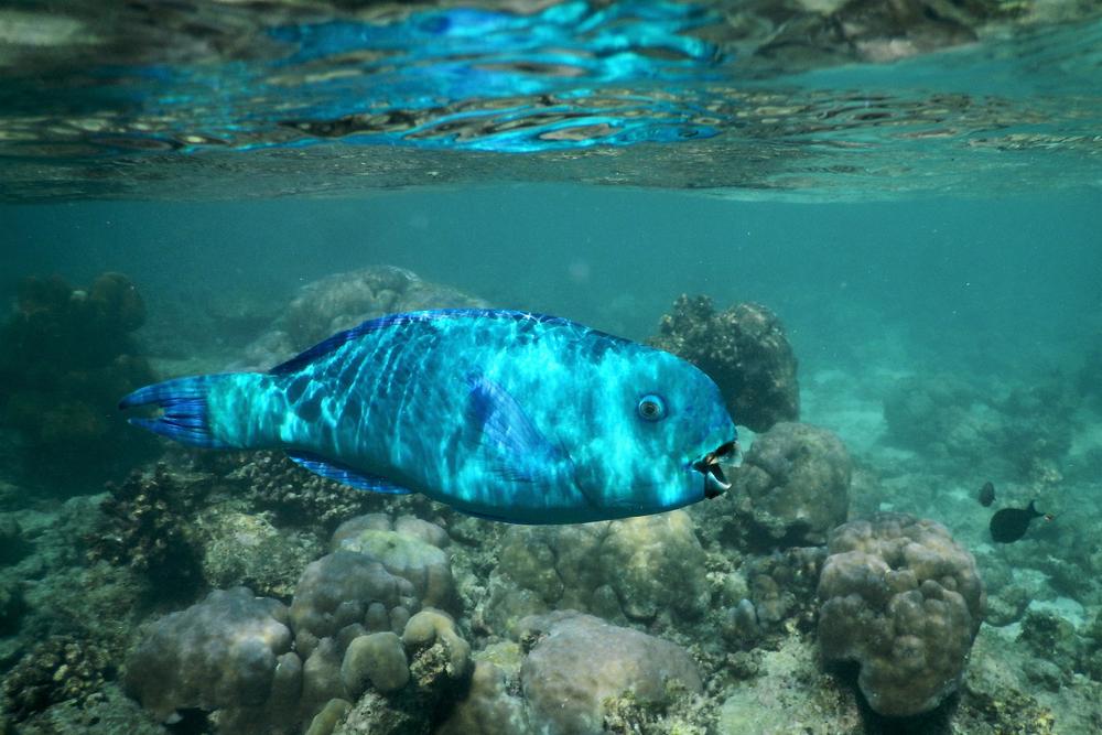 Marine identification