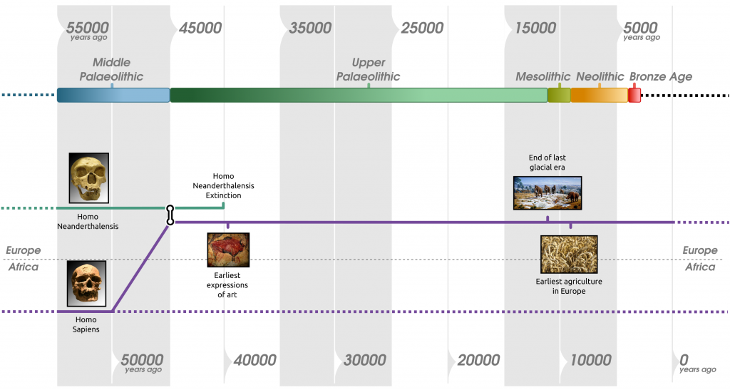 Timeline of human species and periods of Prehistory in Europe, including the Neolithic, in the last 55000 years