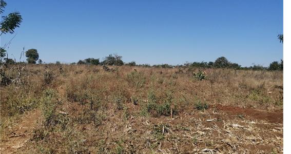 Protecting Cropland in Malawi