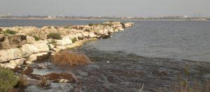 A late Roman jetty in Marea-Philoxénité, southwest Maryut lake (photo Cl. Flaux)