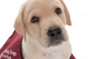 Hearing-Dogs-puppy