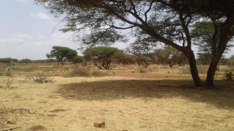 Evaluation of land use change on water and food security in Lagha Bor Catchment, Wajir County, Kenya