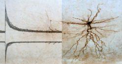 Synapses. Memory. Alzheimer's Disease.