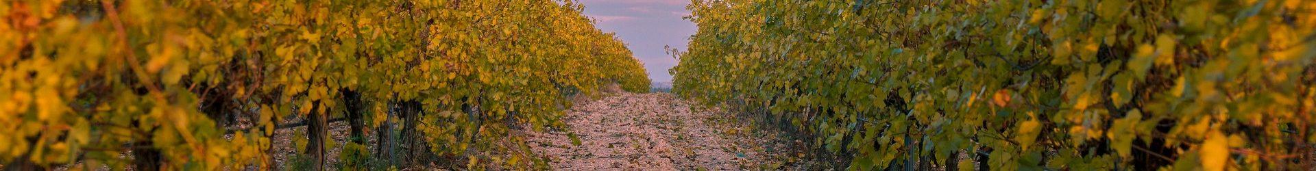 Terroir Wine World Stories
