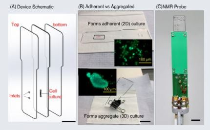 A qualitative and quantitative NMR analysis to compare matabolomic activity of adherent (2D) vs aggregated(3D) cell culture (MCF-7)